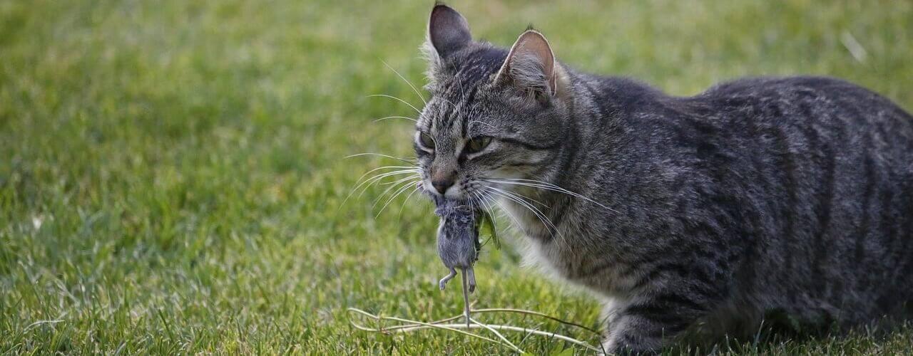 katzenfutteralternativen was fressen katzen gerne außer